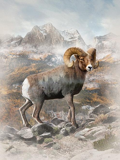Call of the Wild - Big Ram
