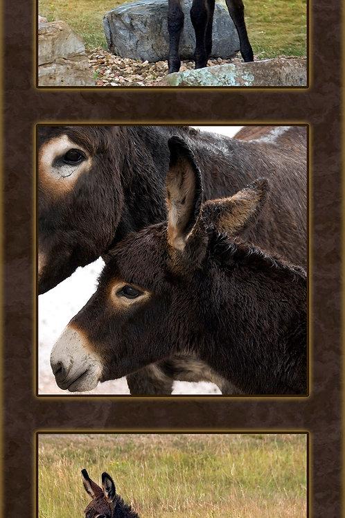 Western, Farm and Ranch - Donkey