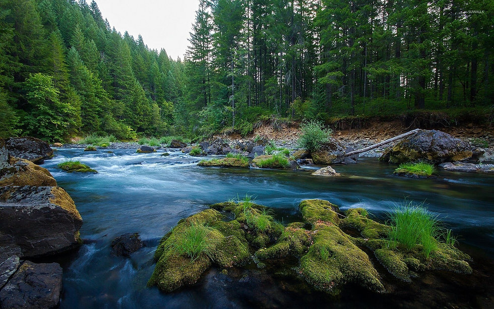 forest-river-46210-1920x1200.jpg