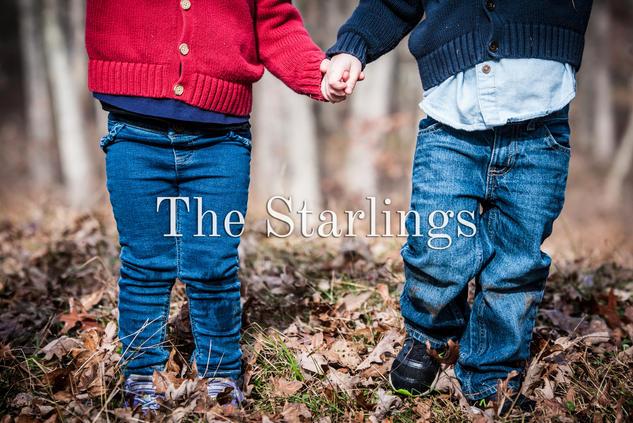 The Starlings.jpg