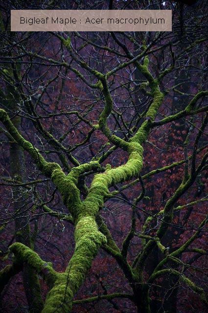 Dark and craggy, covered in moss and lichen.