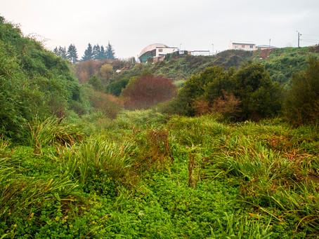 Bienes Nacionales renovó concesión a Patagua para seguir trabajando en la concreción del parque