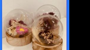 Droogbloemen bubbel