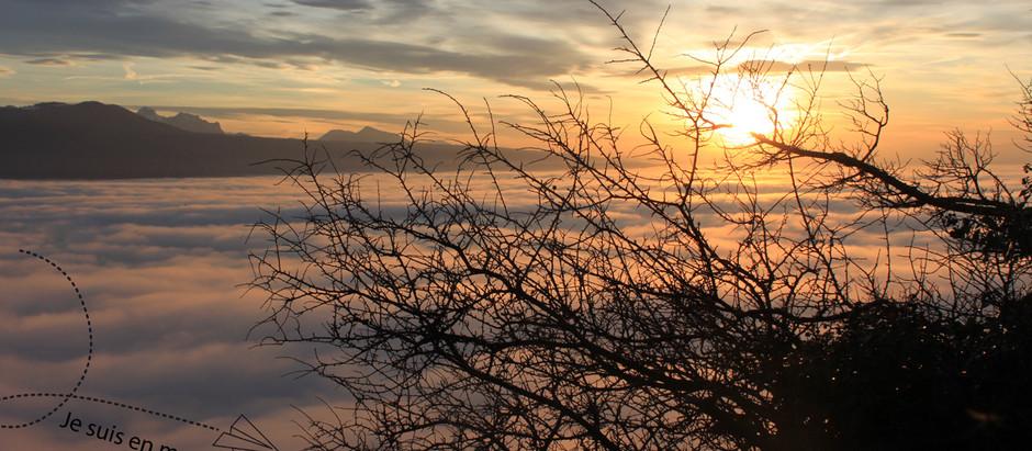 Les pieds sur Terre : Brouillard sur Lavaux