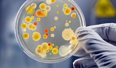 segment_microbiology.jpg