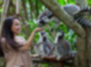 Bali-Zoo-1_900x500.jpg
