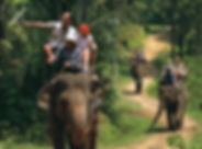 Elephant-safari.jpg
