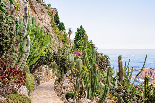 Cacti and other succulents on the cliff