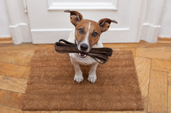 Does your pet want to take you for a walk?