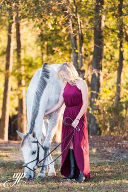beautiful horse portrait fall light