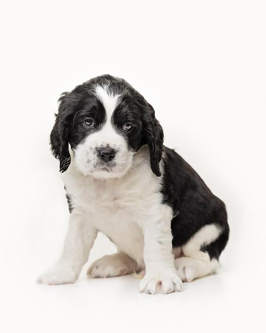 puppies-10-Edit.jpg