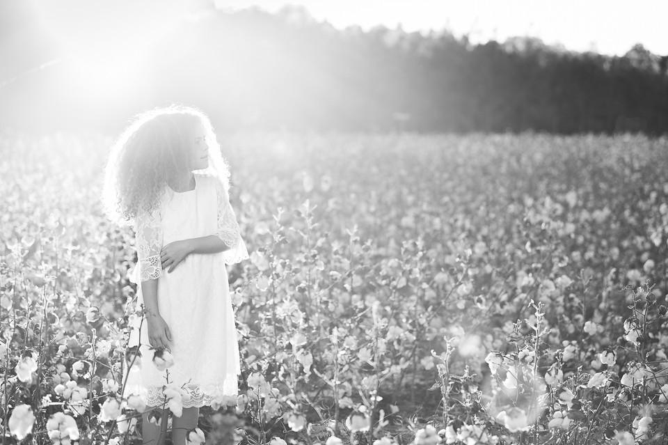 cotton field pictures Sanford