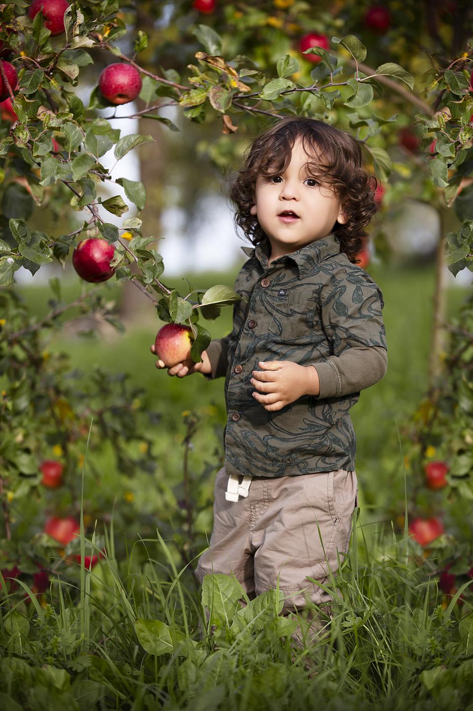 little boy picking apples portraityI