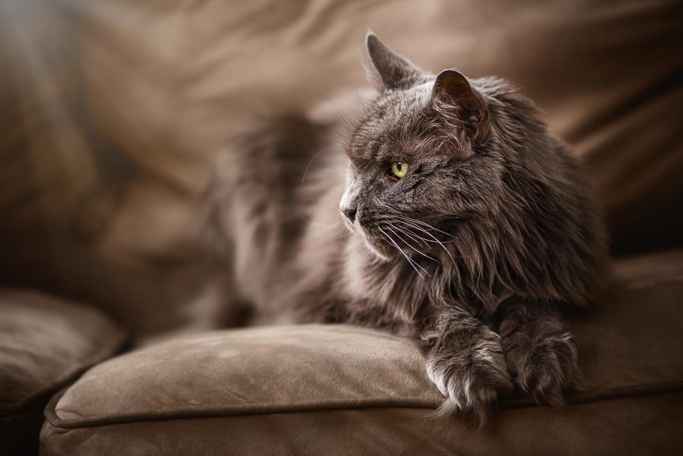 Cat-45-Edit.jpg