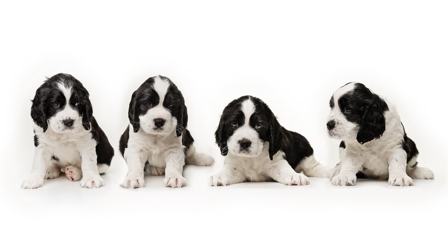 puppies-36-Edit.jpg
