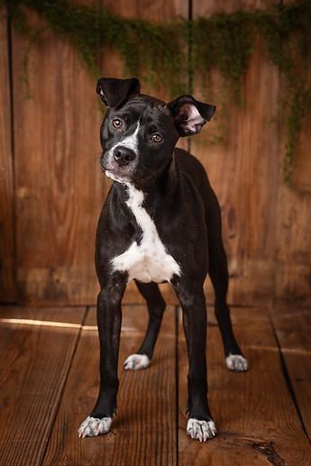 Unchaine Moore Dogs-5.jpg