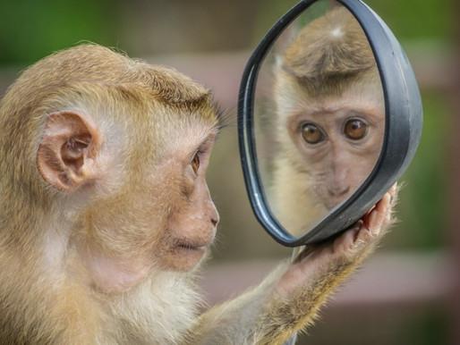 Immaginare per migliorare: la funzione dei neuroni specchio