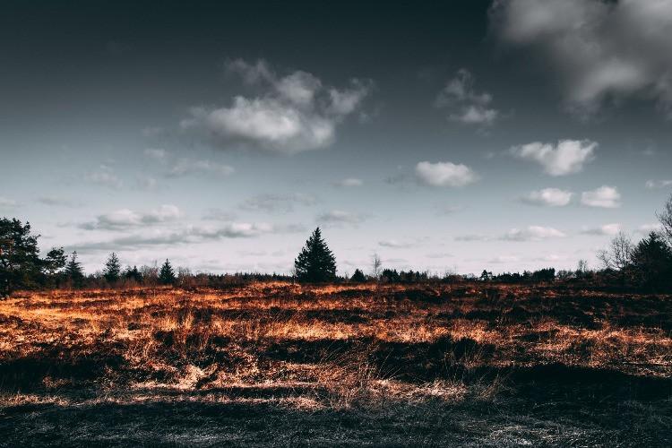 Un esempio di incendio boschivo