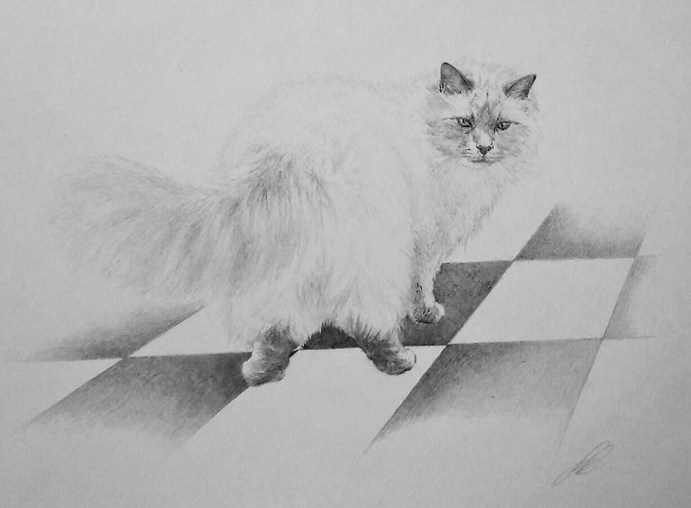 Il gatto che conduce Ciscandra nel Mondo Bipolare