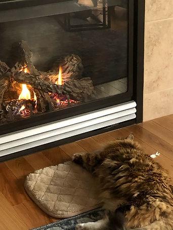 Luxury Cat.jpg