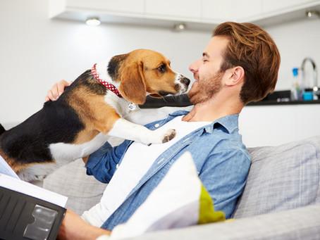 ¿Estás listo para tener un perro?