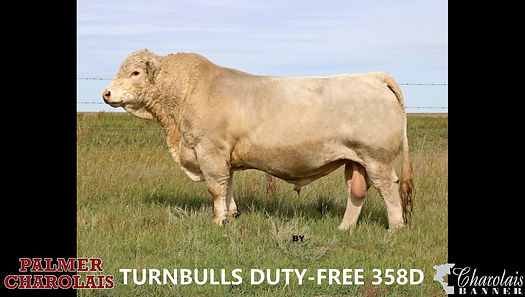 Turnbulls Duty-Free 358D