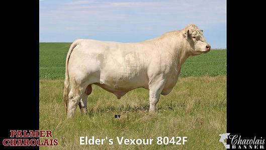 Elder's Vexour 8042F