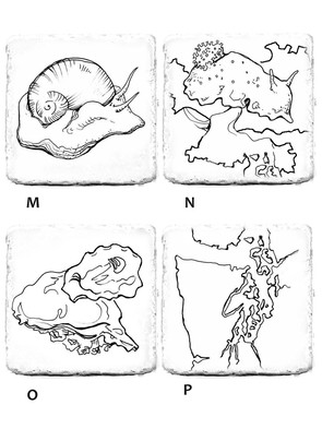 Coloring Pages from Sunstars & Moonsnails