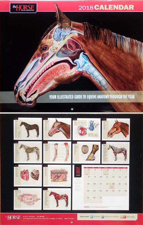horse anatomy calendar