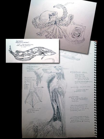 aquarium studies