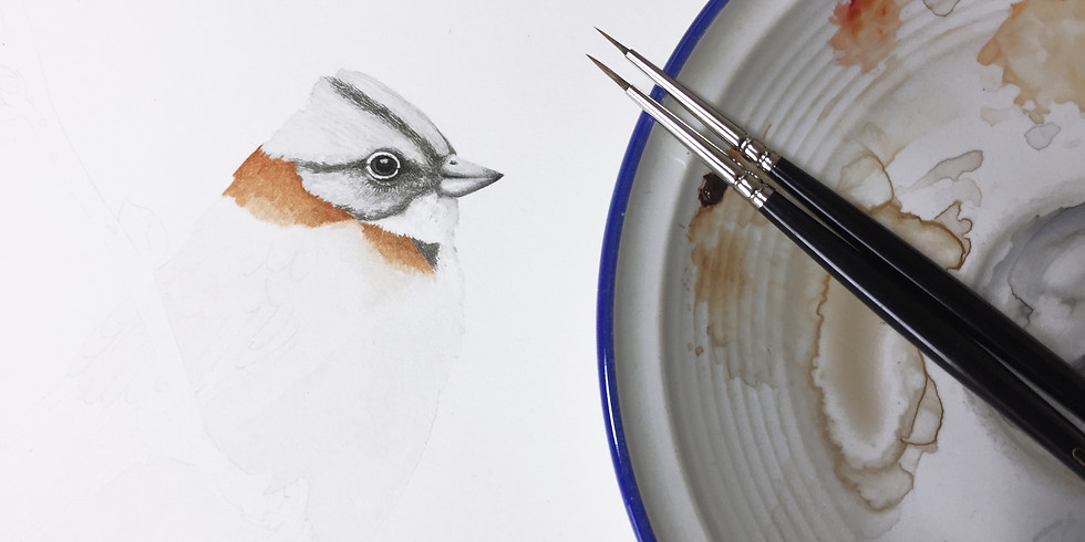 Taller de Ilustración Naturalista: Aves de Chile (1)
