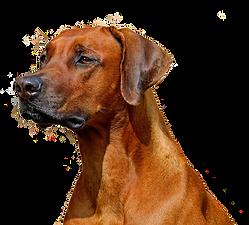 dog-3234285.png