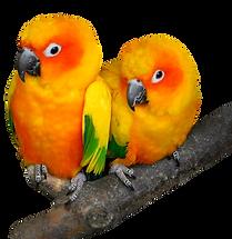 parrot-3080543.png