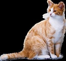 cat-2089916.png