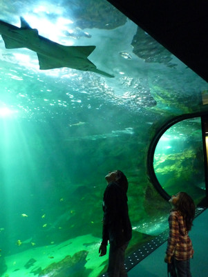 Terre en Vue - L'aquarium de La Rochelle