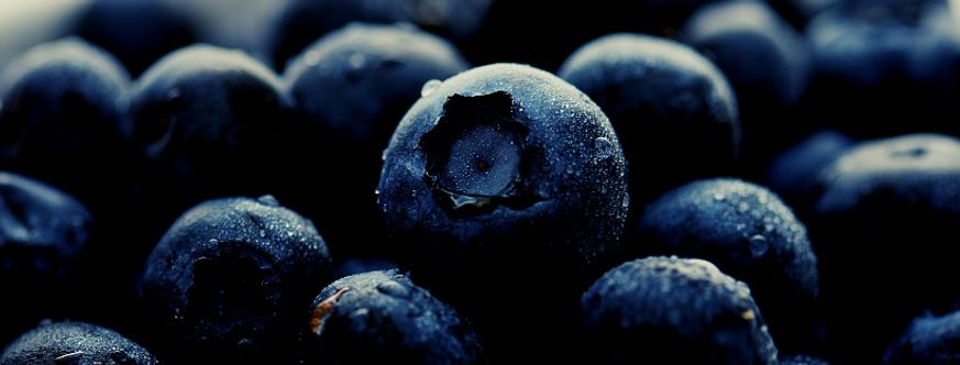 blueberry banner image website.png