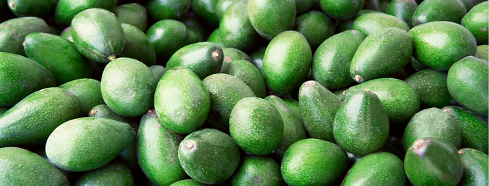 Avocado Banner.png