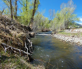1112 Little River Lane.jpg
