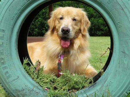 Razas De Perros Más Amigables: 20 Especies Que Debes Conocer