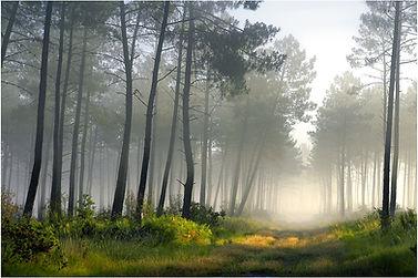 Brume matinale dans les Landes Girondine