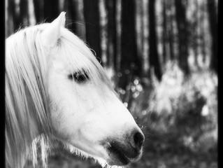 A cheval sous les étoiles.