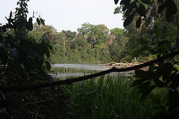 View of the Cocha (Oxbow lake) at Cocha Cashu