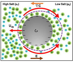 Diffusiophoresis_Schematic.png