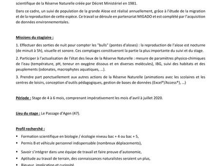 L'offre de stage sur le suivi de la reproduction de la grande Alose en Moyenne Garonne vient de