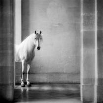 cheval juin 1985