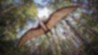 pterosaur-2735500_1920.jpg
