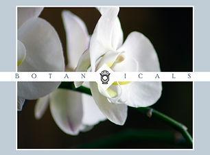 botanicals collection.jpg