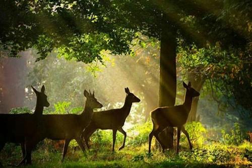 Deer with Sunrays Sunny Seas Nature Park