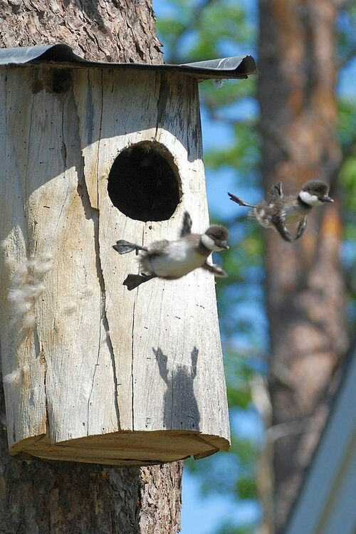 Leaping into life!