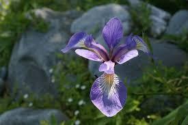 Wild flower purple